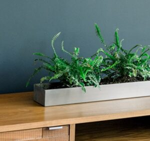fresh interior wall paint with plant on table